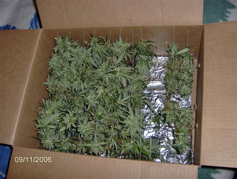09-11-06 boxx.jpg