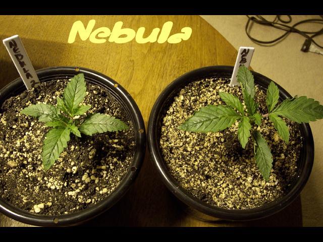 12 days-Nebula.JPG