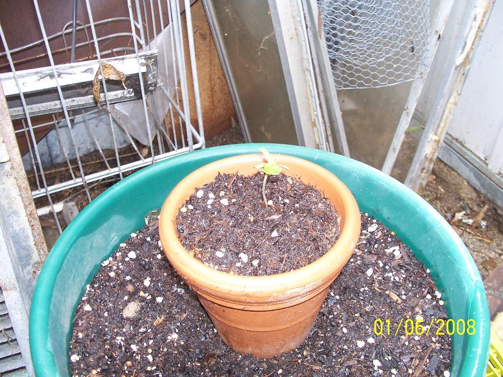 4 grow (3).jpg