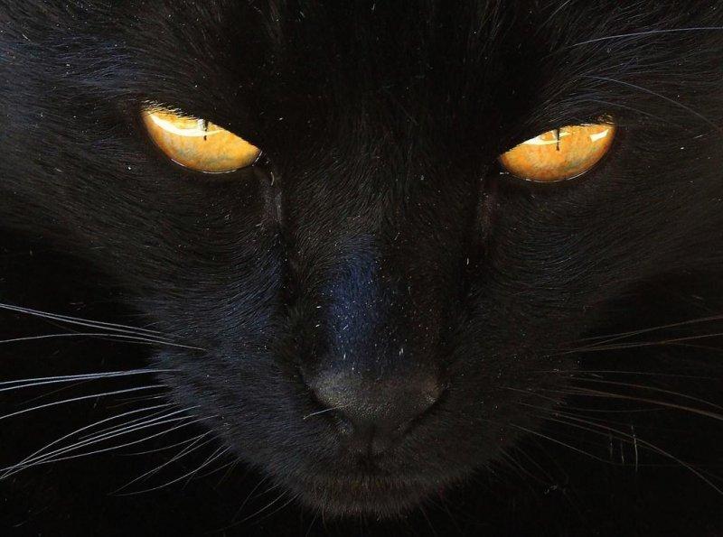 65-654122_mostly-black-tuxedo-cats.jpg