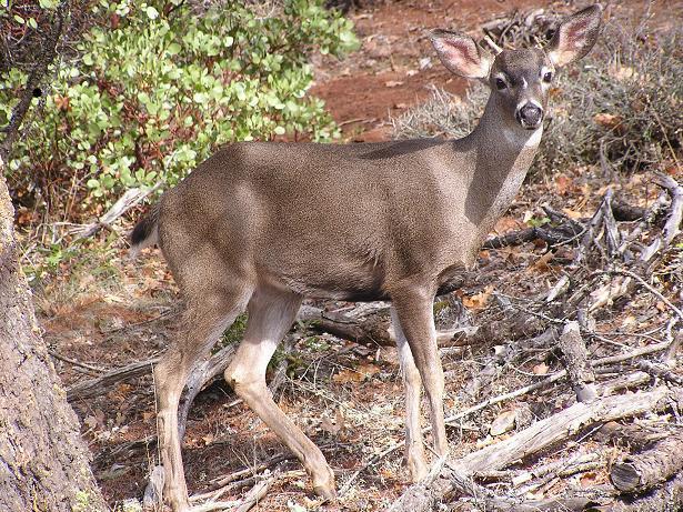 a buck.JPG