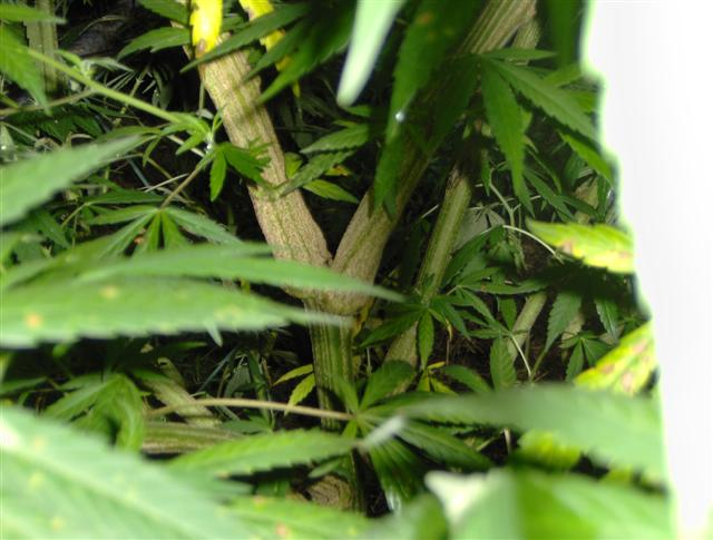 Aug 11 2007 Plants 011 (Small).jpg
