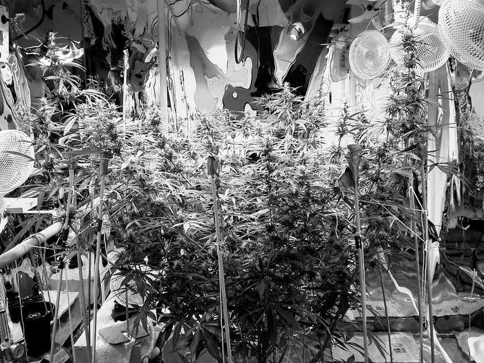 Big Mama flower Black-white.jpg