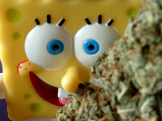 bob wide eye (Small).JPG