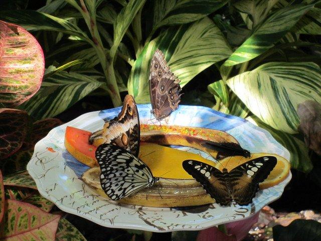 butterfly museum2.jpg