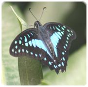 Butterfly1samll.jpg