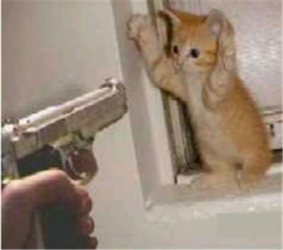 cat-tax-cat-holding-hands-up-gun-pointing-at-him-788789-400.jpg