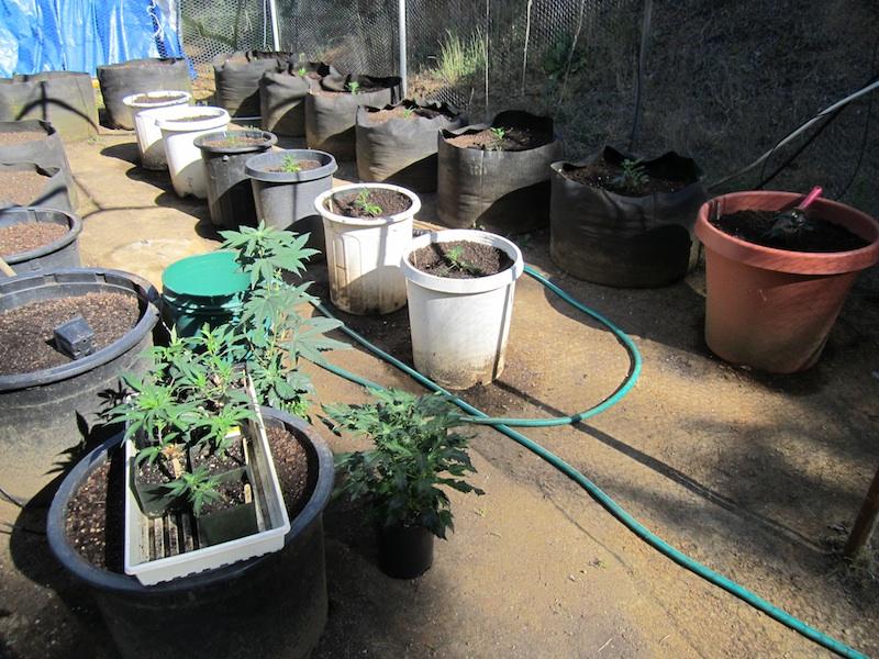 clones planted.jpg