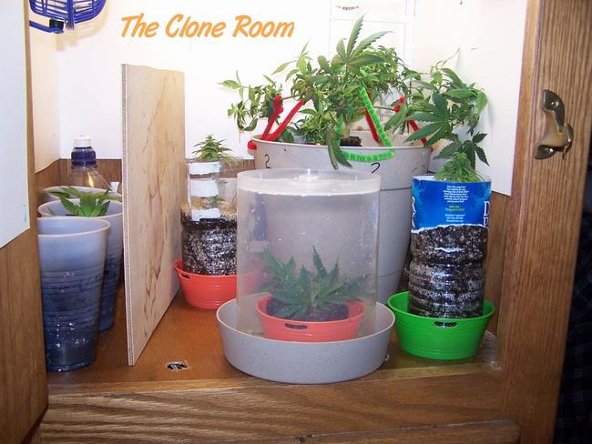 Day  37 clone room.jpg