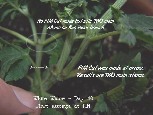 Day 45 WW FIM.jpg