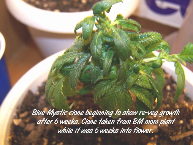Day 50 BM clone.jpg