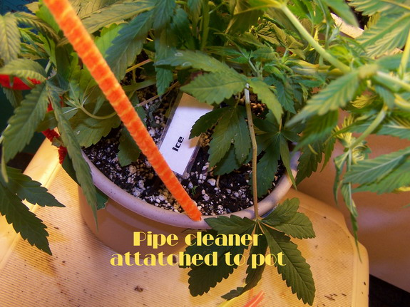 Day 79 pipe clnr 2.jpg