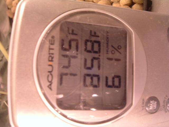 Digital thermometer.JPG