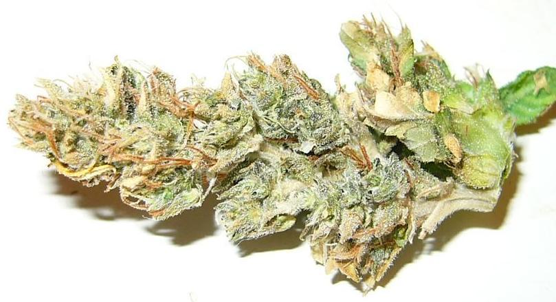dry bud2.JPG