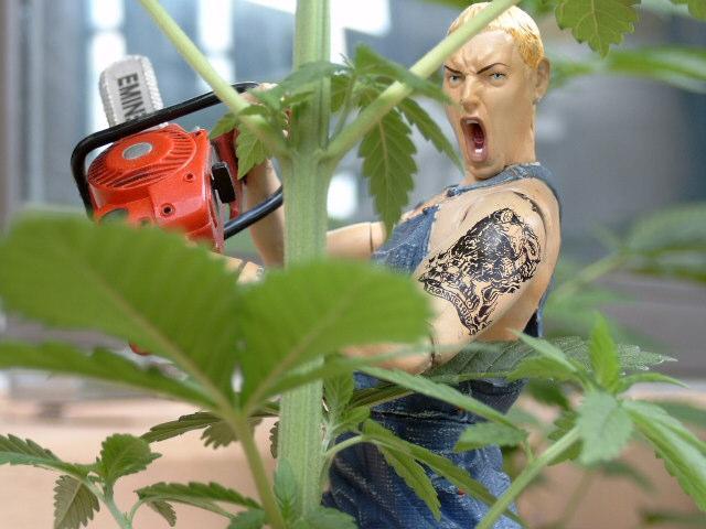 em chainsaw (Small).JPG