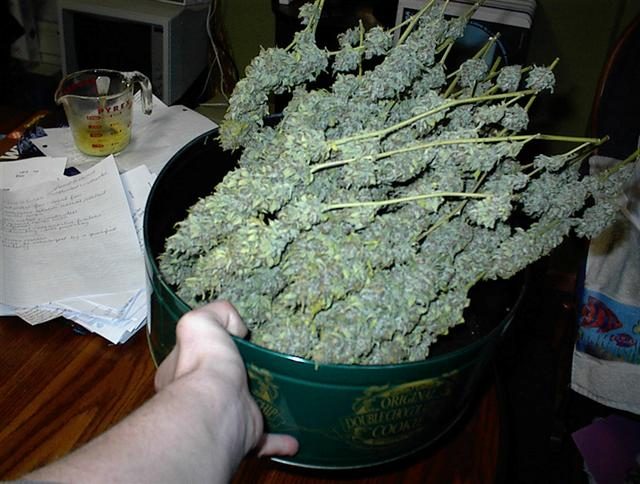Fruit Punch - Finished Dry - ONLY 2 Plants SHRUNK (Small).jpg