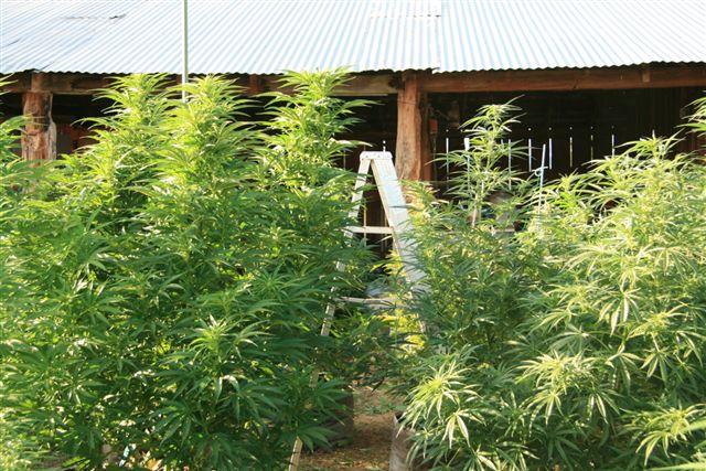 Greenhouse 022.jpg