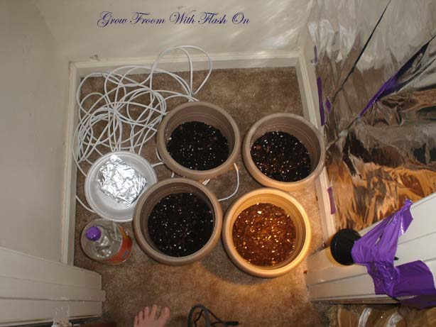 grow room with flash.jpg