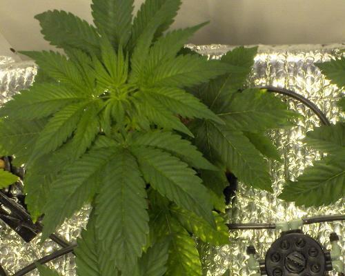 grow use.JPG