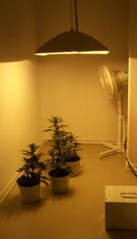 grow_room.jpg