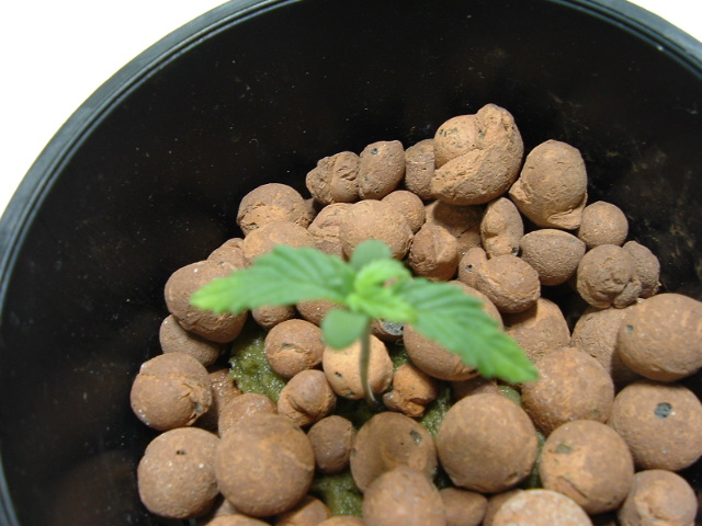 growroom 026.jpg
