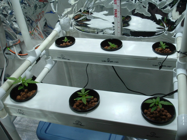 growroom@2weeks 001.jpg