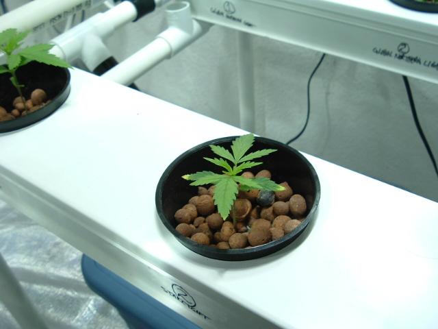 growroom@2weeks 003.jpg