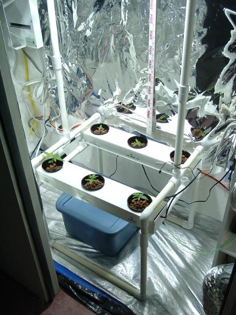 growroom@2weeks 008.jpg