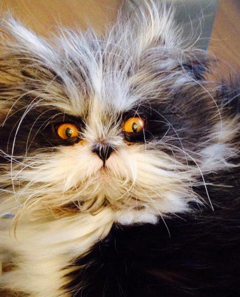 hairy-cat-death-stare-atchoum-15.jpg