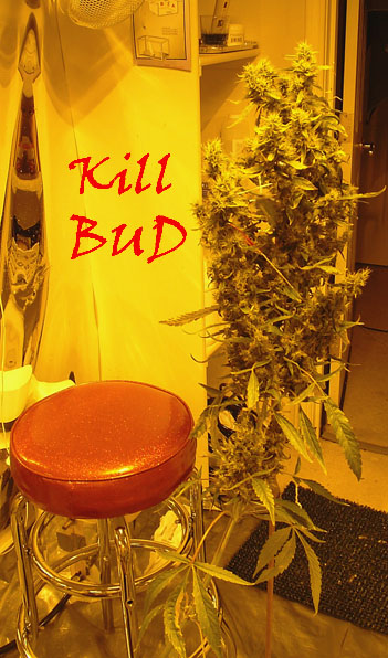 Kill Bud.jpg