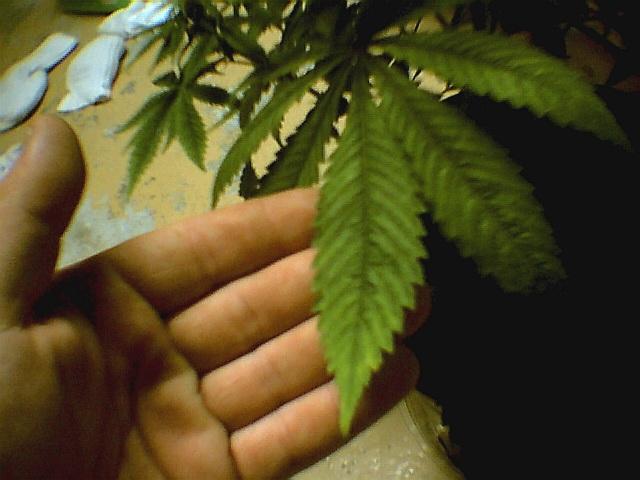 leaf001.jpg