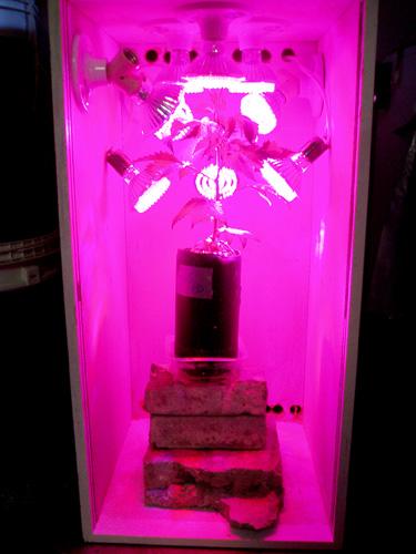 LEDs1.jpg