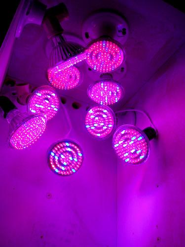 LEDs2.jpg