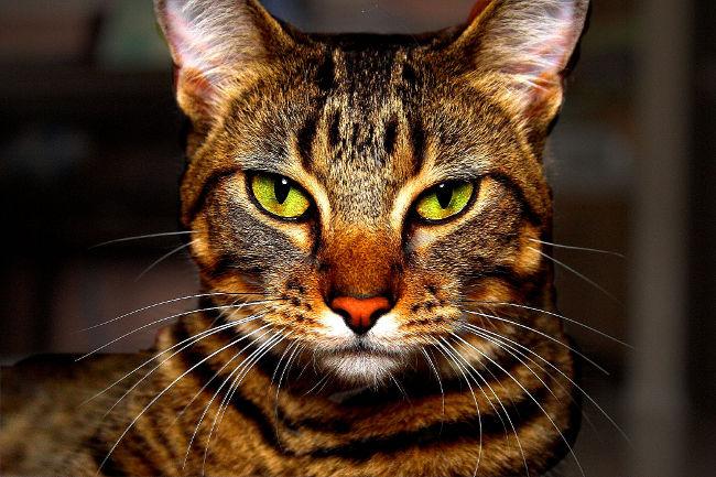 Male-Cat-Names_Boy-Cat-Names.jpg