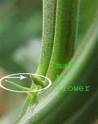 male-number-2.jpg