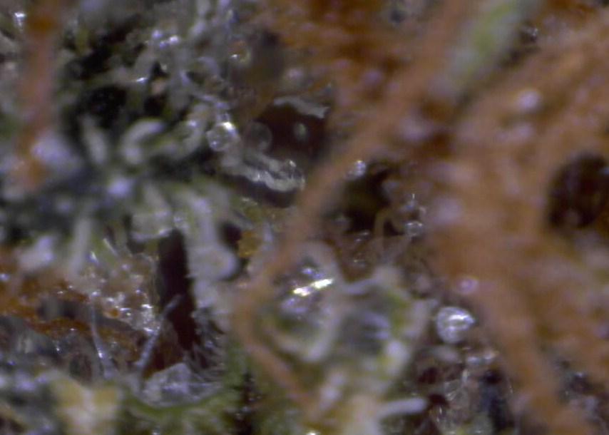 Micro2 003.jpg