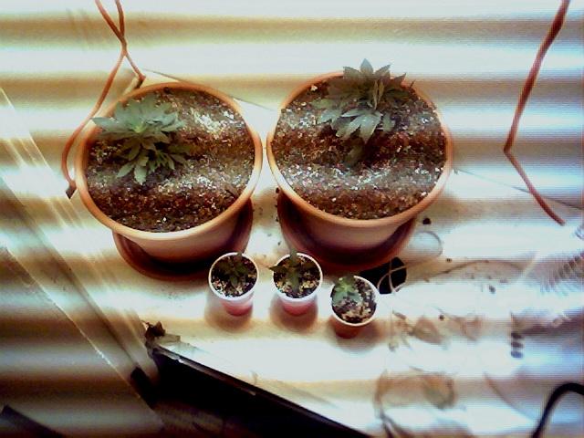 my grow.jpg