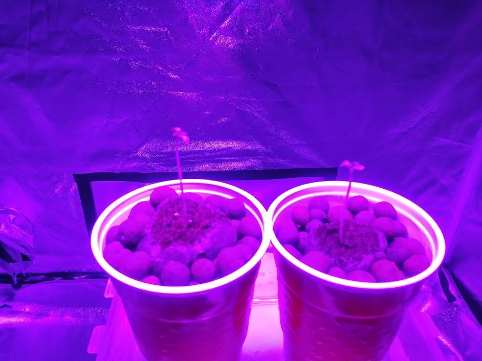 my seedlings.jpg