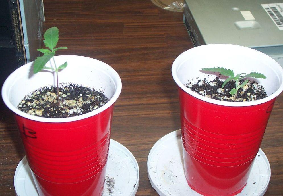 newplants.jpg