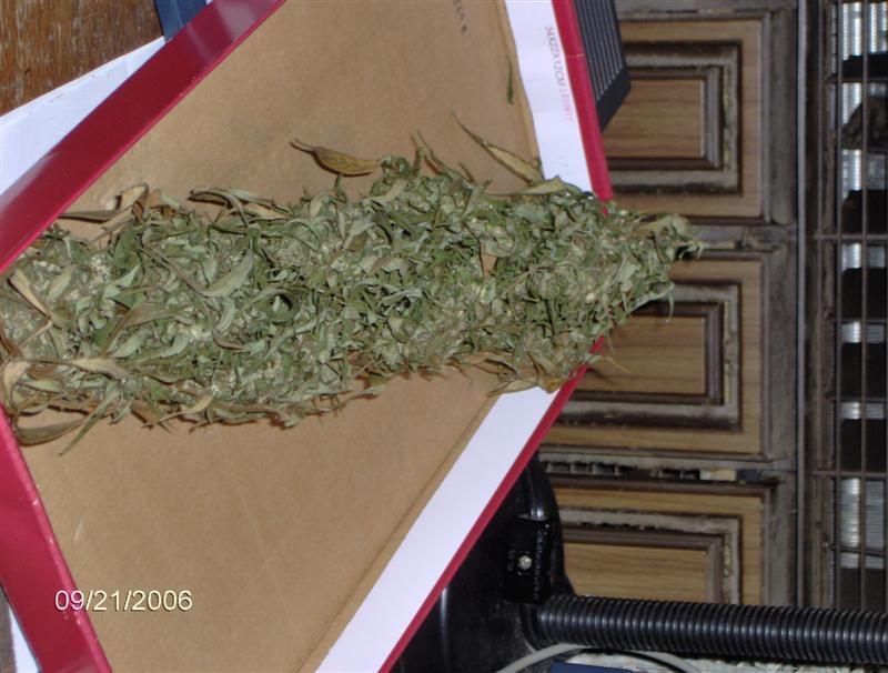 old harvest 07 020.jpg