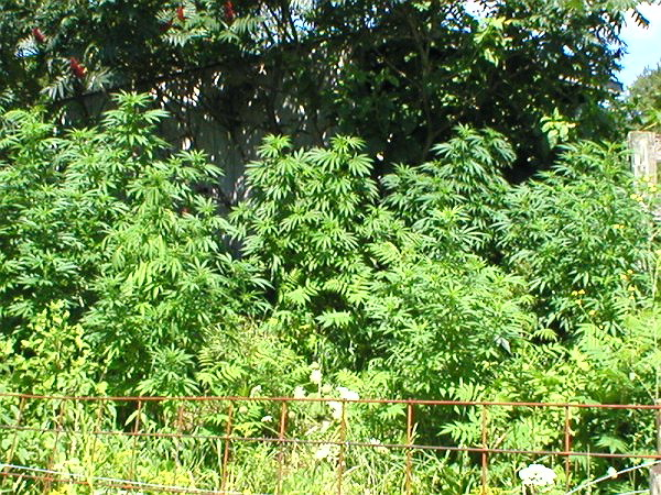 P804 the grove_renamed_20473.jpg