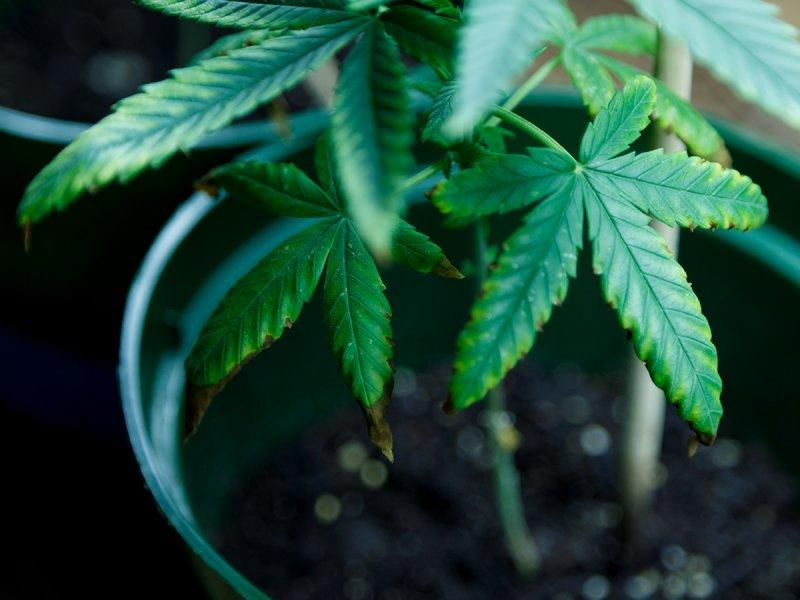 Plant 01b.jpg
