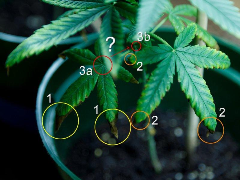 Plant 01b2.jpg