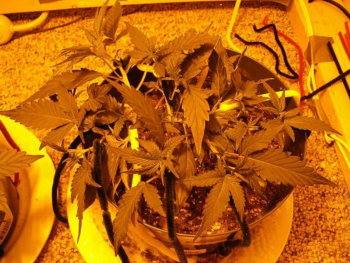 plant#1.JPG
