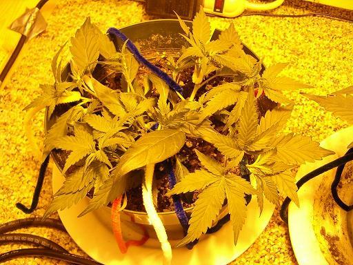 plant#2.JPG
