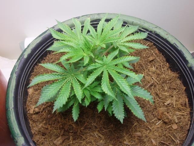 plant 6.5 (1).JPG