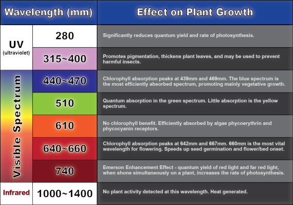 plant-light-wavelength-chart-01.png.cf.png