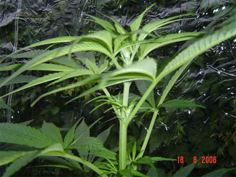 plant11.jpg