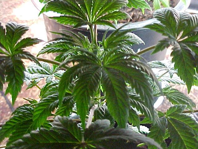 plant2-2.JPG