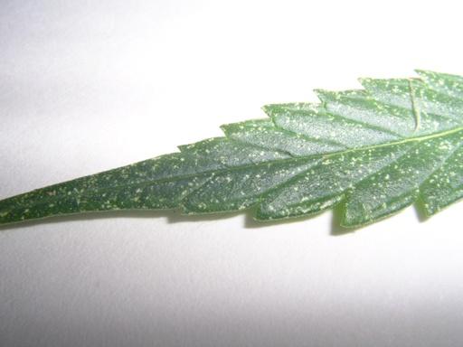 plant2a.JPG